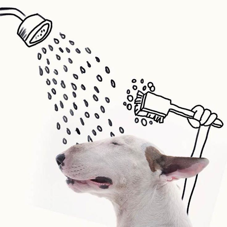 Bull Terrier – Les nouvelles photos Instagram de Rafael Mantesso et son adorable chien | Ufunk.net