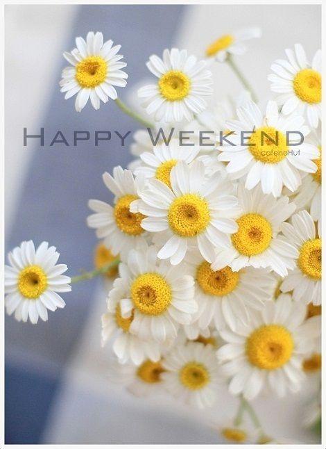 ☀️️️Happy weekend.