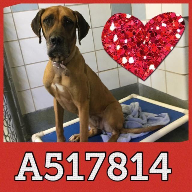 Adopt A517814 On Pet Care Adoption Pet Care Tips