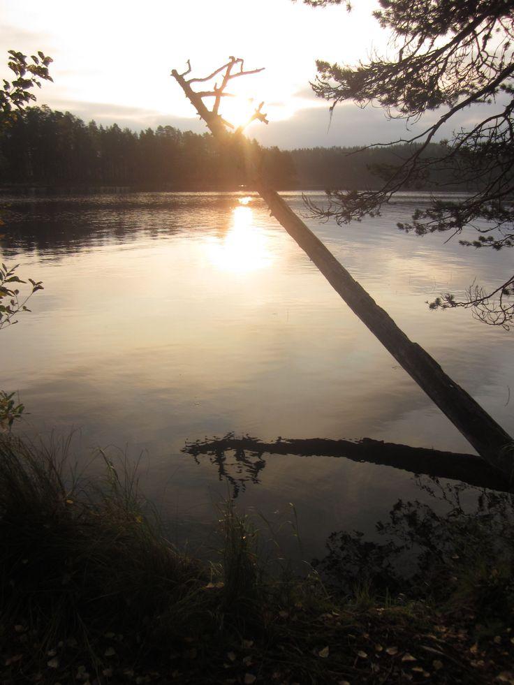Early morning on September at Salamajärvi National Park. #salamajärvi #nationalpark #kivijaervi #autumn #silence #nature #hiking