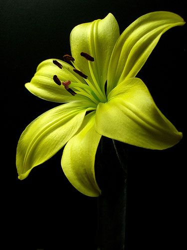 Yellow Flower Picture