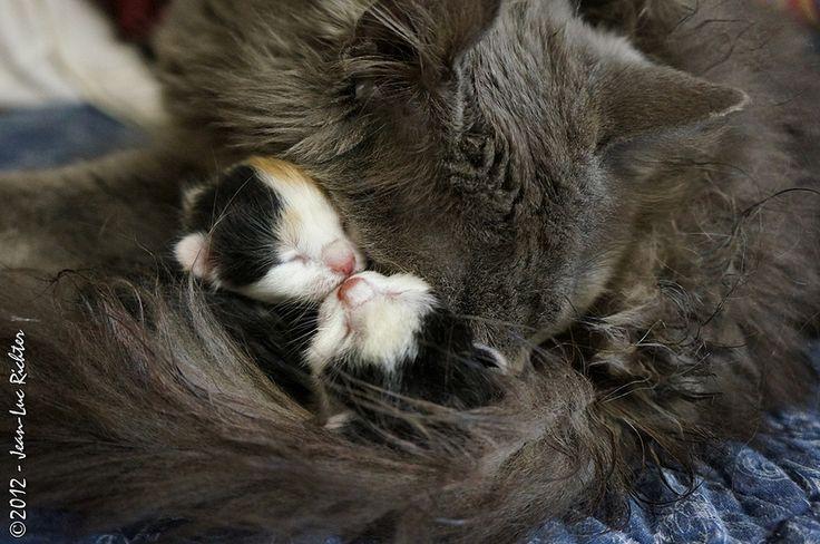 Mom & kittens  Nouveau-nés