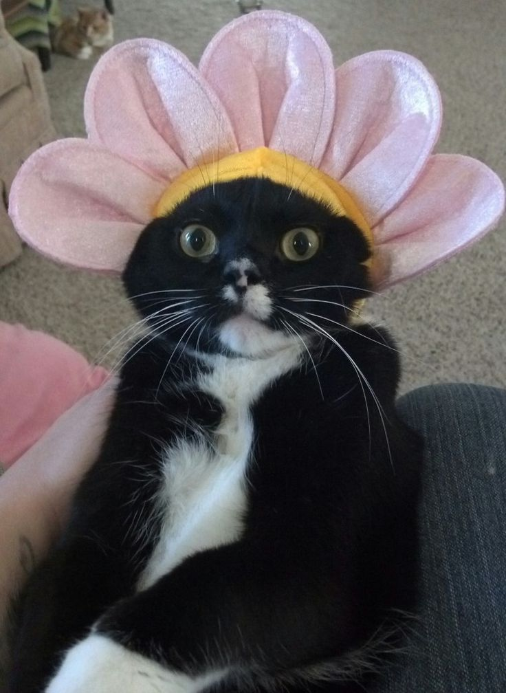 Halloween Costumes worn by angry cats