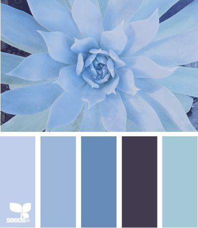 succulent blues
