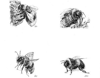 """Check out new work on my @Behance portfolio: """"Miniature Bumble Bees"""" http://be.net/gallery/43808755/Miniature-Bumble-Bees"""