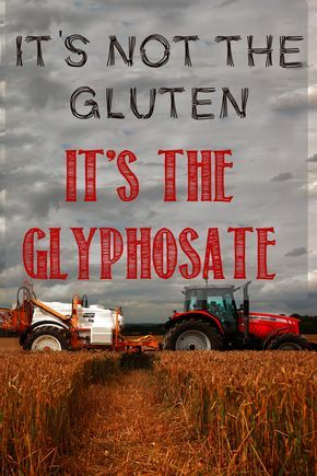 You may not have a gluten allergy... it may just be Monsanto's poison designed to rupture the stomachs of insects...it's Hillary approved !
