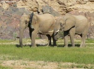 Elefanti in Namibia - Foto Archivio Press Tours (http://www.presstours.it)