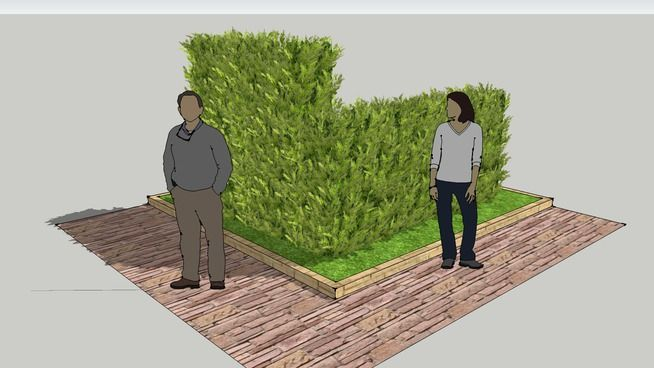 SIEPE leylandii castlewellan gold - LOW HEDGE - 3D Warehouse
