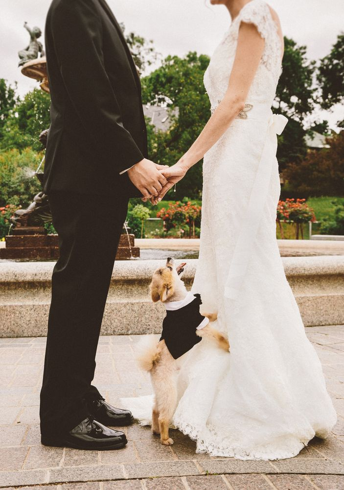 This puppy could not be happier to see his humans tie the knot! | Studio 29