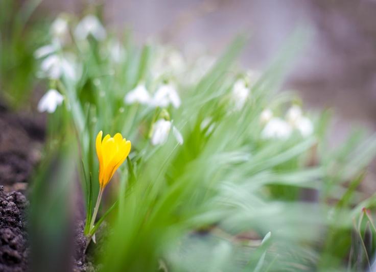 Wiosna za domem / Spring in my backyard
