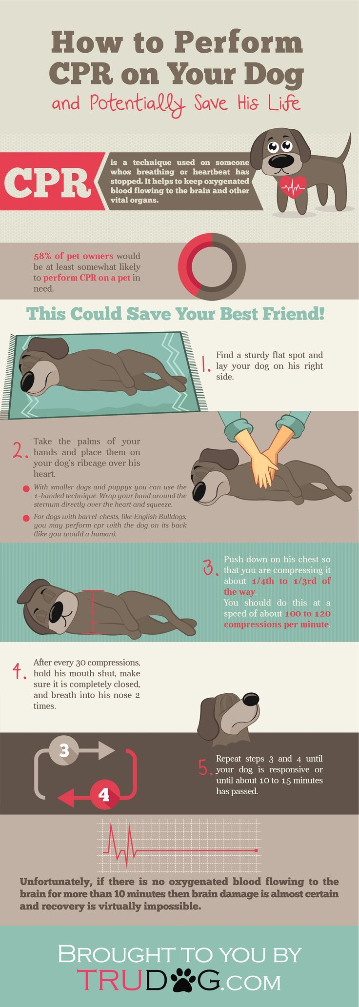 It's important to know CPR for dogs- it could save your dog's life one day!!
