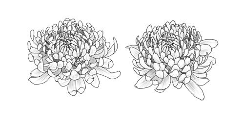 black and grey chrysanthemum tattoo - Google Search
