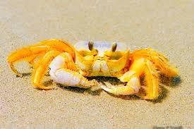 Výsledok vyhľadávania obrázkov pre dopyt crabs in the sea