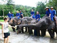 "Royal Thai Elephant Conservation 2007  CenterThai Elephant Conservation Center  Km. 28-29 Lampang-Chiang Mai Highway  Hang Chat, Lampang 52190, Thailand  GPS: 18° 21' 52""N, 99° 14' 53""E"
