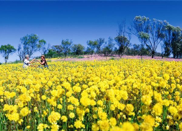 Wildflowers Western Australia www.sightseeingpassaustralia.com