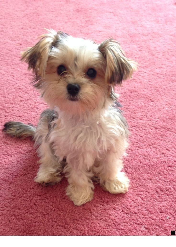 Want To Know More About Dogs For Sale Simply Click Here To Find