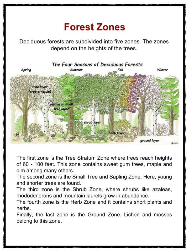 an analysis of the characteristics of the deciduous forest biome The temperate deciduous forest  if you want to see more high-quality pictures of organisms from the temperate rainforest and other biomes, click here.