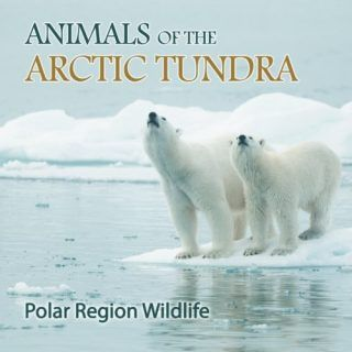 Animals-of-the-Arctic-Tundra-Polar-Region-Wildlife-0