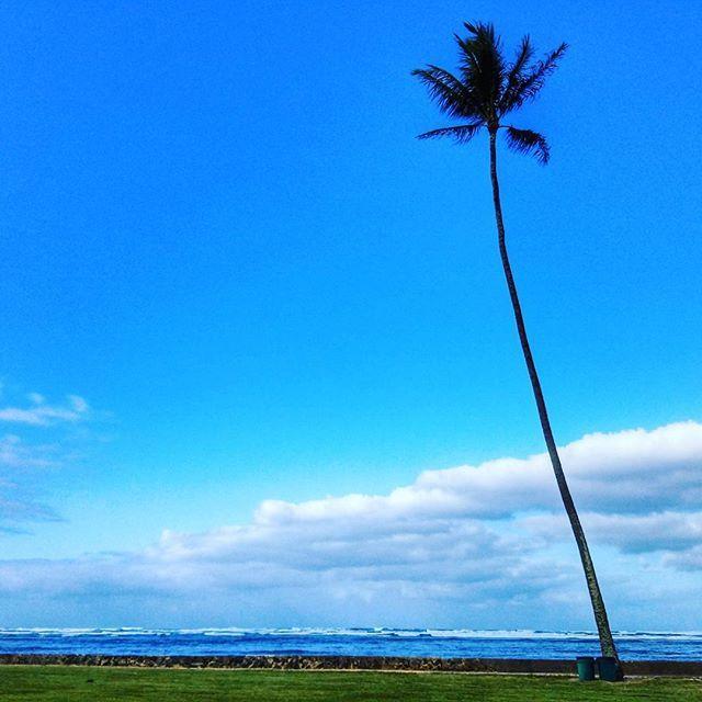 【m_hykwaaa0824】さんのInstagramをピンしています。 《Have a good weekend everyone . . Northshoresの帰りに偶然見かけた一本のヤシの木が気にかかったので撮影しました~♪ . . #hawaii#oahu#northshores #swanzybeachpark#beach#park #palmtree#bluesky#cloud#cloudporn #instagood#inptapict #ハワイ#スワンシ―ビーチパ―ク #オアフ島#ヤシの木#海#空 #皆さんお疲れさまでした #沢山のお付き合いありがとうございます》