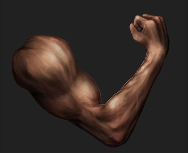 Рисование руки с использованием основ анатомии