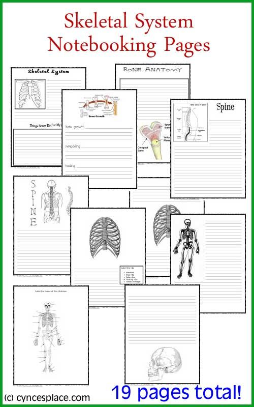 Free Anatomy notebooking pages - skeletal system