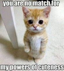 Have a good day! You are no match for this kittens cuteness