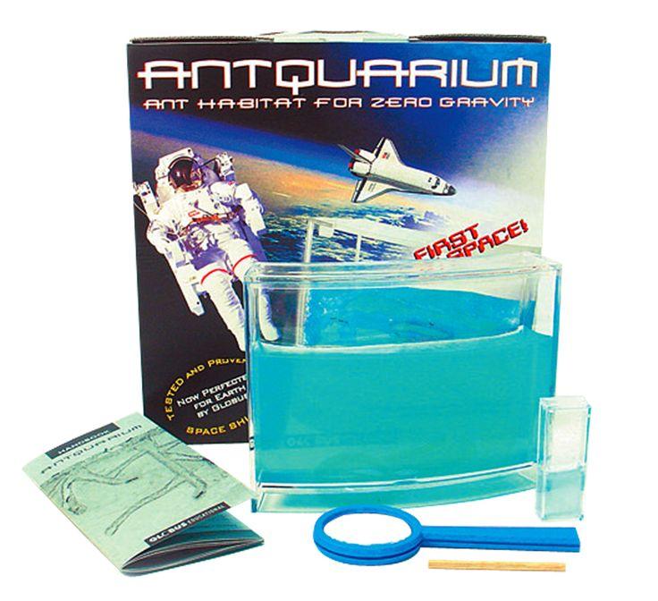 Vi befinner oss i slutet av nollnoll-talet, och fiskakvarium är lika ute som Dr. Alban, Spy Bar och Tomas Ledin - tillsammans! Dags då för antquariumen att göra entré, dessa myrfarmar med ursprung i rymdexperiment utförda av amerikanska Nasa. Istället för vatten innehåller antquariumen en näringsgelé, vilken myror både kan få näring av och bygga gånga...