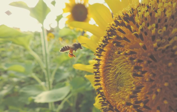 If you have a little bit of room in your outdoor space, why not make a bee house? You could give #bees some much needed rest #LoveYourPlot #bee #house #sunflower #garden #gardeningtips #advice #beecare