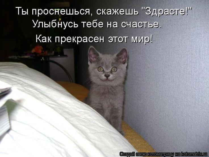 касается все потому что я кот а ты нет картинки экстрасенсов пожалуй, одно