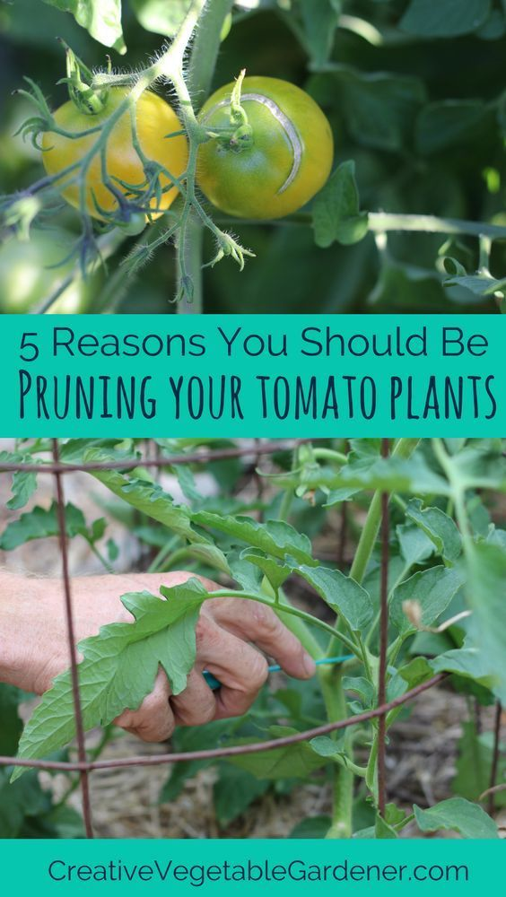 Tastier tomatoes, easier harvests, less disease, and more!