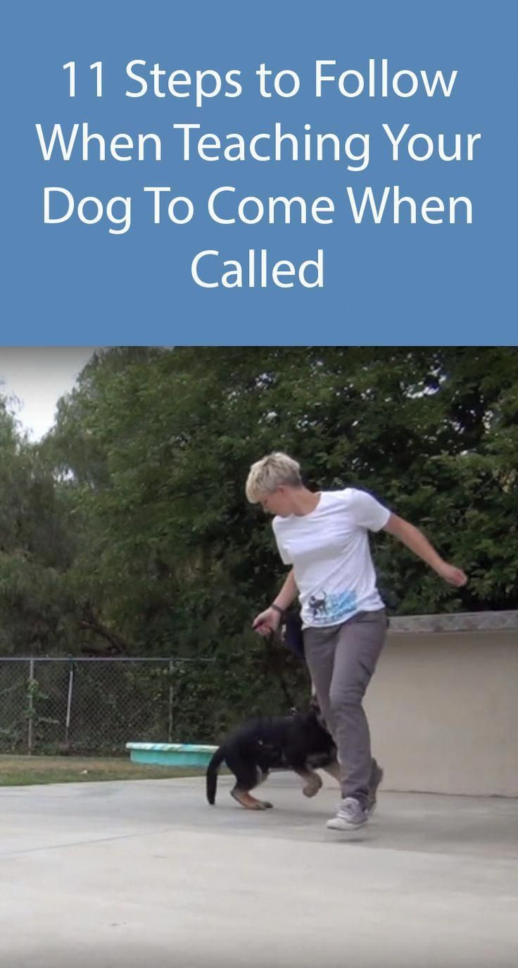 Teach Your Dog To Come When Called Relax When You Are At The Park