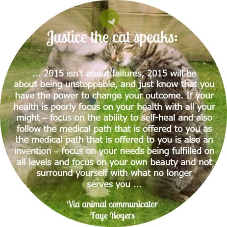 See the whole message from Justice the #cat in Tailbook blog: http://tailbook.wordpress.com/2014/12/30/cat-wisdom-for-the-new-year/. What a great way to step from 2014 to 2015. Happy New Year! Work that magic!