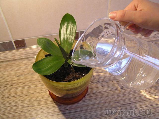 Сок алоэ как современный органический стимулятор роста для растений