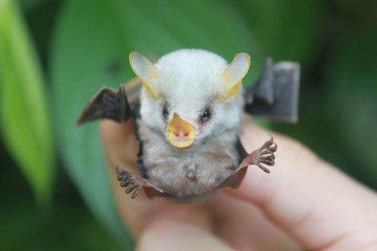 Bat media - HFMO
