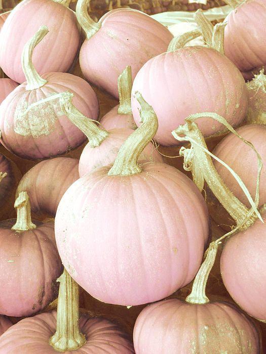 The Pink Days Of Autumn ( O rosa  dias de outono. ) -° º-° °-º °- ~Sol Holme~ -° º<-° °->º °-