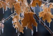 Непогода стала причиной отключения электроэнергии вканадских провинциях Онтарио, Квебек иНью-Брунсвик, атакже вамериканских штатах Нью-Йорк иВермонт.