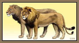 Size comparison of American lion (Panthera atrox) and African lion (P. leo), Carl Buell
