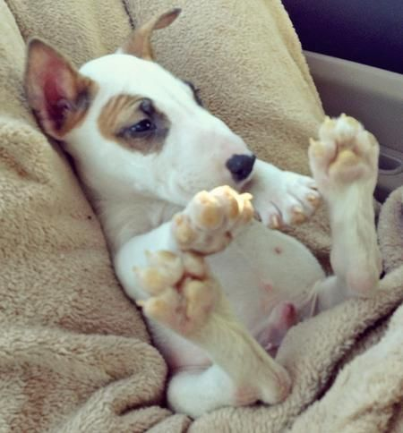 "From our friends at Daily Puppy, it's Marv, who his people describe as ""kangaroo-footed pup who loves sleeping like a beached whale."""