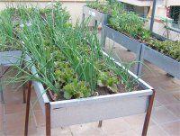 Conservación de la semilla - Horturbà