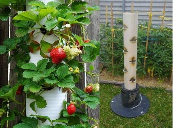 How to make a strawberry tube planter.  Great way to use less land space AND keep the bunnies and weeds out of it.