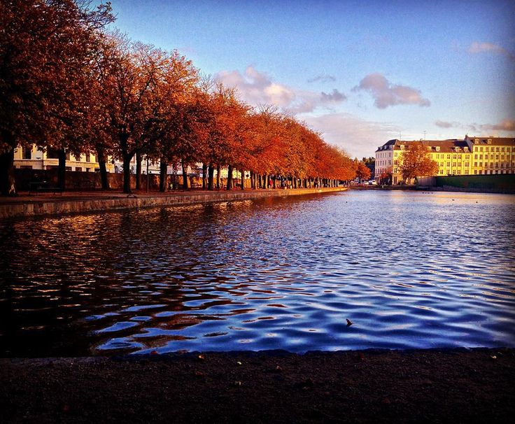 One of the final shots of the autumn leaves before they fall near our HQ in Østerbro  #autumn #copenhagen #copenhagenlife #findroommate