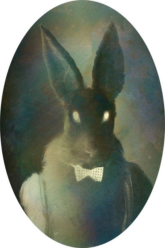 Rabbit Artist: Saara Salmi, 2011. 21 x 29,7 cm. Photograph.
