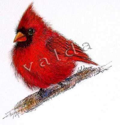 Red Cardinal Bird. Image size 5x7   gift item. print