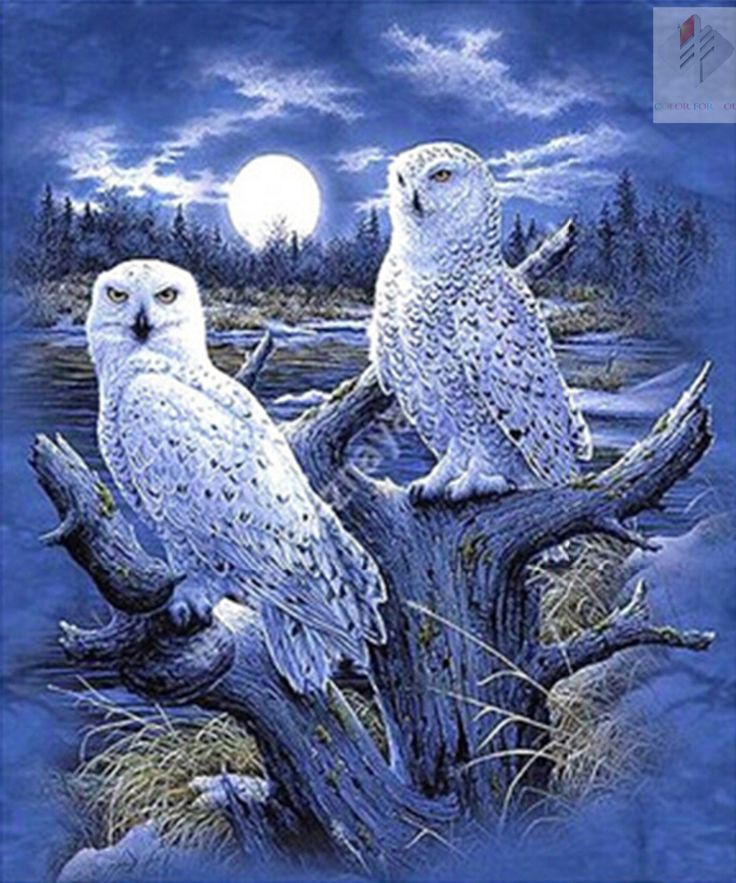 Two owl and Moon Full drill diamond embroidery painting cross stitch painting home decor 3D kits diamond mosaic wall paint - Owl Stuff Owl Stuff