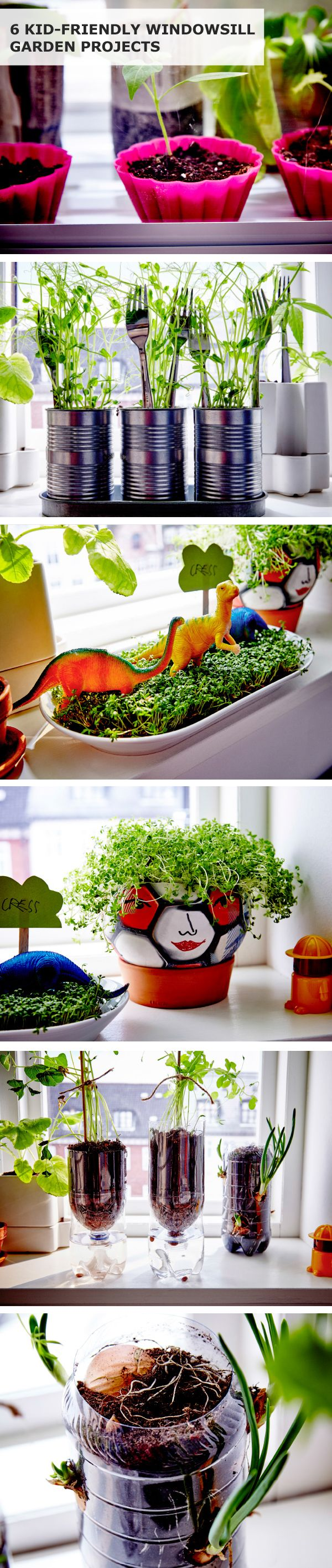 Click for 6 kid-friendly windowsill garden projects! These easy (and tasty) plant projects use old or leftover things from around the house and can be grown right on your windowsill.