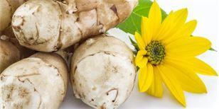 Slunečnice topinambur je skvělá pro diabetiky. Jak ji pěstovat?