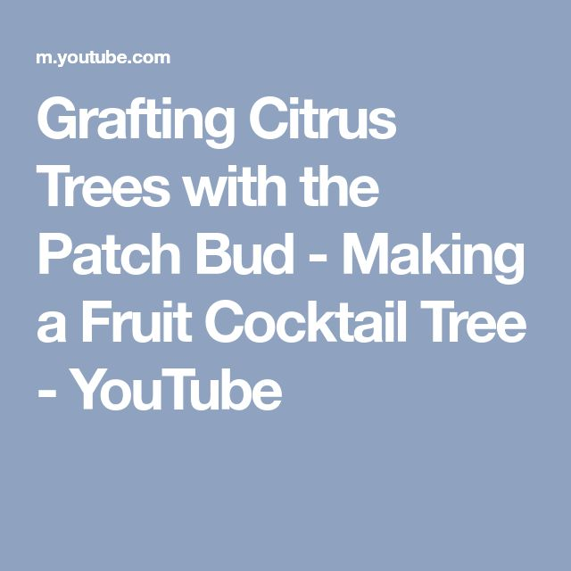 Grafting Citrus Trees with the Patch Bud - Making a Fruit Cocktail Tree - YouTube