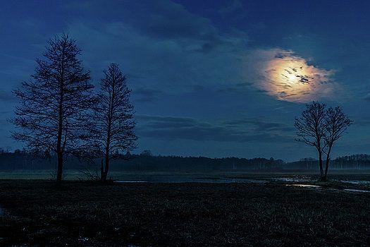 Moonlight by Katarzyna Szymanska