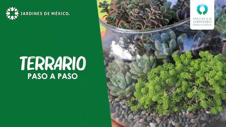 Bonsai, Diy Planters, Terrariums, Flower Power, Diy And Crafts, Cactus, Patio, Nature, Plants