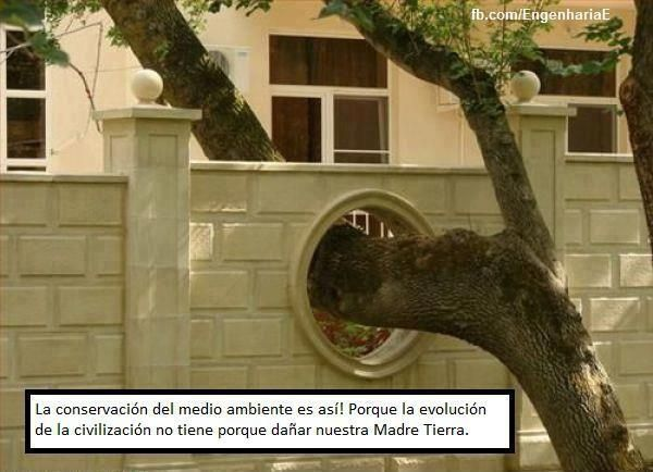 """tree hole in fence -- """"...because the evolution of civilization doesn't have to hurt Mother Nature...""""Ideas, Gardens Fence, Stuff, Funny Pictures, Green Buildings, Mothers Nature, Saving, Trees, Design"""